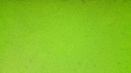 Green Background. Wolffia globosa or Fresh water Alga, Water Meal, Swamp Algae is local food for Thailand. Stock Photo