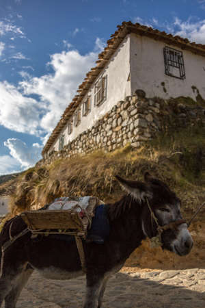 rural house with beautiful view on the mountain and a donkey
