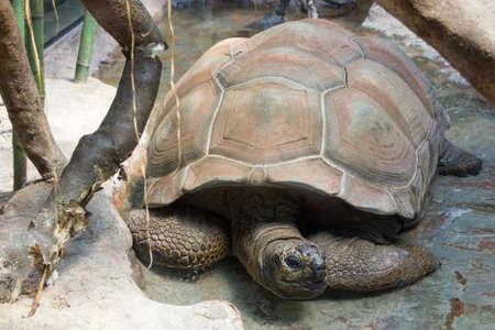 turtle on the road Stockfoto