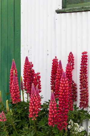 strange flowers in the backyard