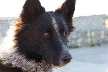 Dog with orange eyes
