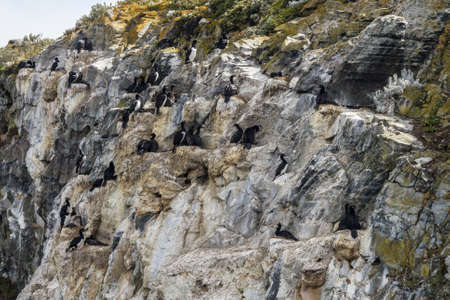 birds on the rocks of a mountain Stockfoto