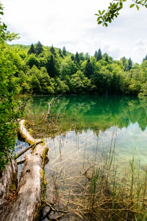 plitvice: Plitvice Lakes National Park in Croatia, beautiful landscape