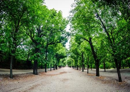 boles: Road through row of green trees in a park Stock Photo