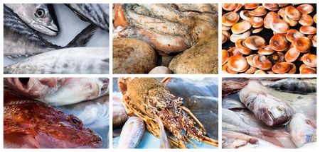 Collage of raw seafood. Close-up of lobster, octopus, redfish, mackerel and mussel photo