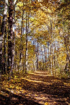 sigulda: Picturesque autumn forest illuminated by the morning sun  Sigulda, Latvia Stock Photo