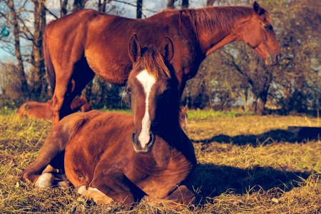 Two beautiful brown horses outdoors photo