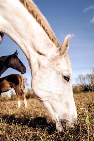 equitation: Horses outdoors Stock Photo