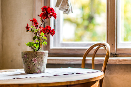 Flowers in a pot on a rustic wooden table Standard-Bild