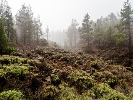 volcano slope: Northern slope of volcano Teide. Tenerife, Canary Islands. Spain