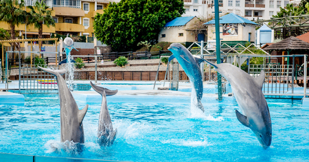 andalusia: Benalmadena, Spain- January 03, 2014: Dolphins show in Selwo Marina in Benalmadena, Malaga. It is the only park of its kind in Andalusia. Editorial