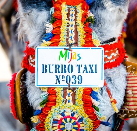 burro: Muestra del taxi en una cabeza de burros. Taxis burro famoso. Una gran atracción para los visitantes en Mijas, pueblo andaluz en la Costa del Sol. España