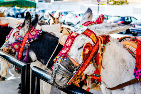 donkey: Famous donkey taxi. The donkey rides began in the 1960s. A major attraction for visitors in Mijas, Andalusian town on the Costa del Sol. Spain Editorial