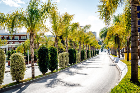 palm lined: Road lined with palm trees. Malaga Southern Spain