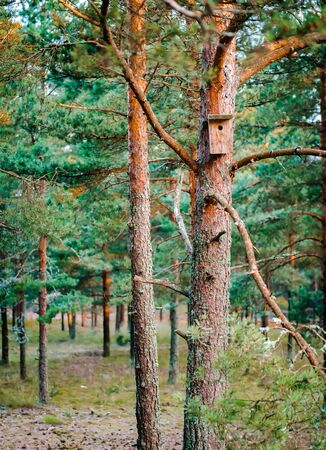 roosting: Bird box affixed to a pine tree trunk. Nida, Lithuania