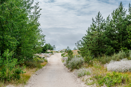 pathway: Sandy pathway to the Baltic Sea. Lithuania Stock Photo
