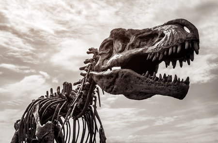 Tyrannosaurus rex skeleton against cloudy sky background. Toned image 스톡 콘텐츠