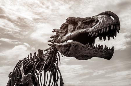 Tyrannosaurus rex skeleton against cloudy sky background. Toned image Standard-Bild