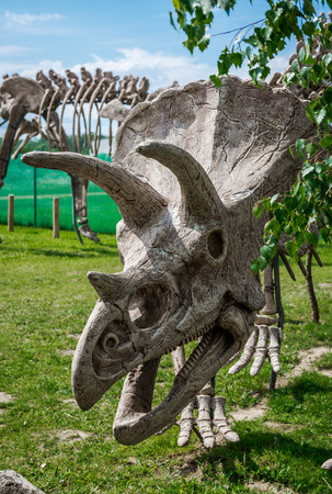 triceratops: Triceratops skeleton outdoors