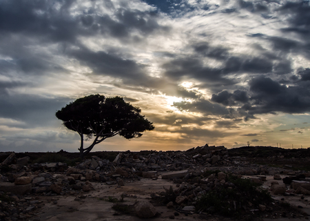 arona: Beautiful canarian sunset and silhouette of a tree against cloudy, dramatic sky. Tenerife, Canary Islands. Spain