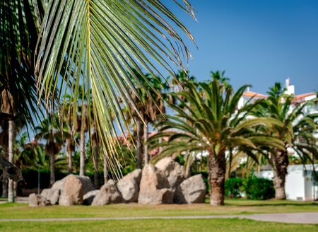 palmtrees: Palm trees in the Costa Adeje resort, selective focus. Tenerife, Canary Islands. Spain