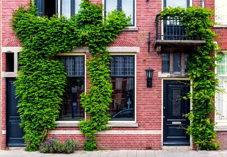 Brick building covered with green ivy. Netherlands. Western Europe