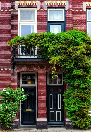 ivy wall: Brick building covered with green ivy. Netherlands. Western Europe