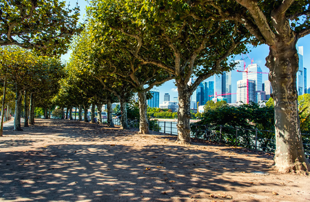 waterfront: Park alley with a view of Frankfurt am Main downtown. Western Germany