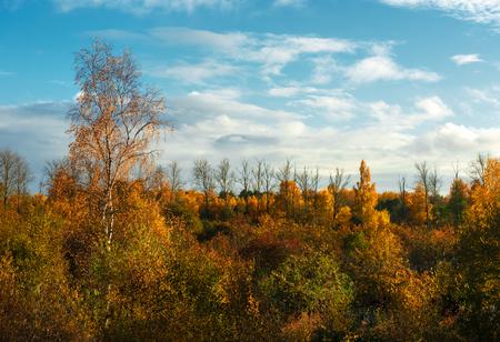 feuille arbre: arbres d'automne color�s. Lettonie. Europe du Nord