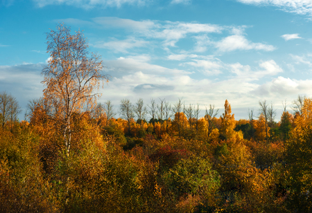 green tree: Colorful autumn trees. Latvia. Northern Europe