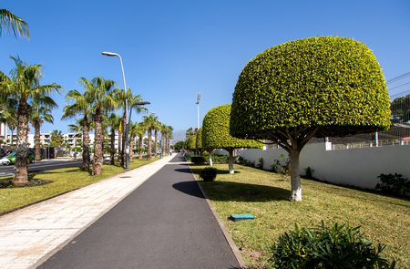 canary islands: Las Americas street. Tenerife, Canary Islands. Spain