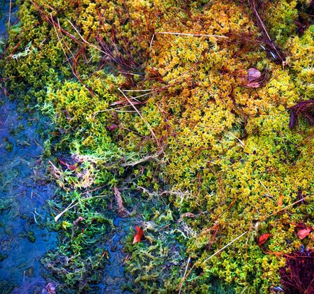 mossy: Colorful mossy background close-up