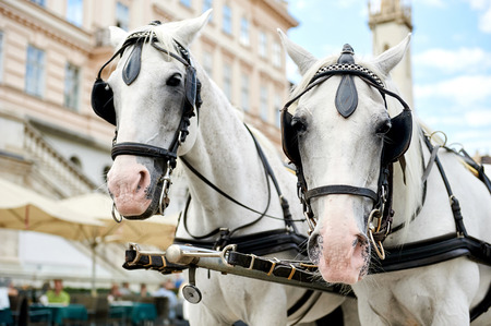 hackney carriage: Horse-drawn carriage (Fiacre) waiting for a tourists in the old city in Vienna, Austria