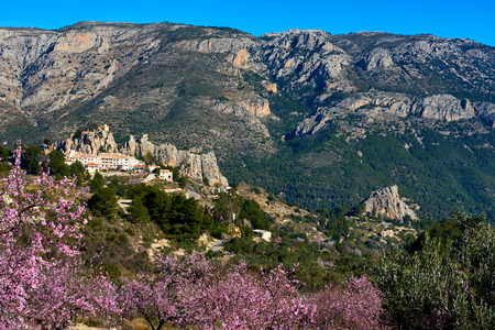 baixa: Guadalest castle on a rock and blooming almond trees. Guadalest is a small village on the Costa Blanca, the most visited village in Spain