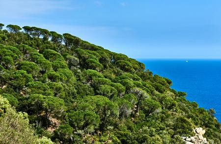 Hill of Cala Salionc, Tossa de Mar. Costa Brava, Spain Stock Photo