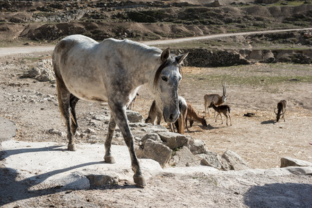 gelding: Horse at Safari park in Spain
