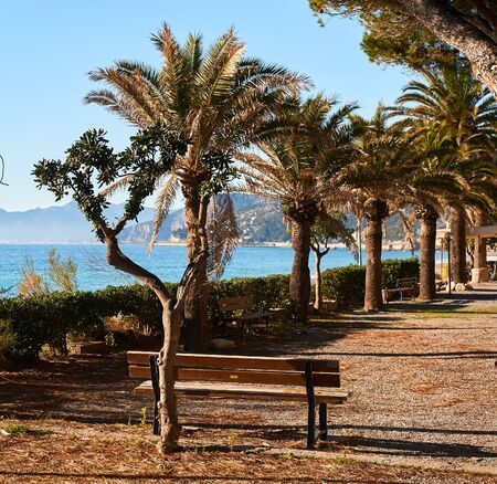 palmtrees: Palm-trees lined seaside of Italian Riviera at winter.