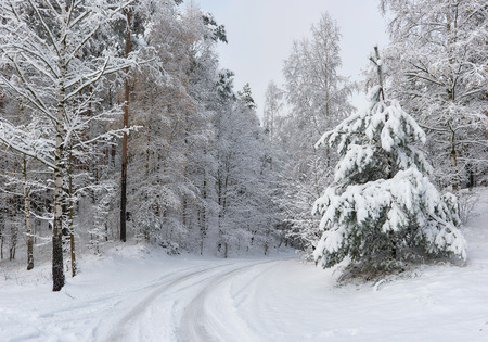 snowbanks: Snowy forest