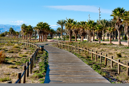 palm lined: Pedestrian walkway lined with a palm trees in Retamar park. Province of Almeria. Spain