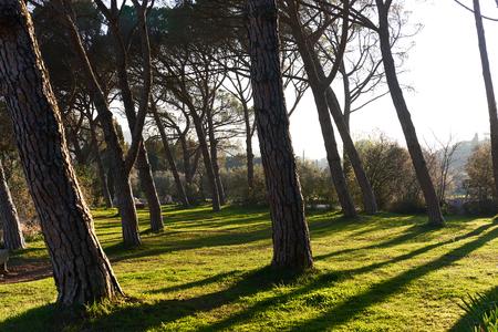 lourmarin: Park of Lourmarin. Provence-Alpes-Cote dAzur. France