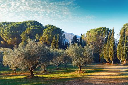 lourmarin: Picturesque park of Lourmarin. Provence-Alpes-Cote dAzur. France