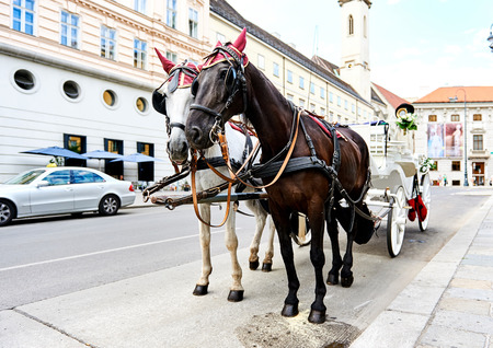 Wedding horse-drawn carriage (Fiacre) in the old city in Vienna, Austria