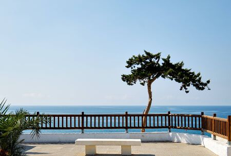 Idyllic scenery lonely tropical tree on Mediterranean sea horizon blue waters background, fenced place with white bench, Cabo Roig, Orihuela, Province of Alicante, Costa Blanca spanish resort, Spain 写真素材