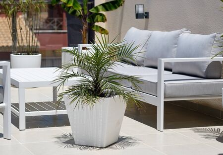 Corner of relaxation, modern furniture, empty grey couch wooden white washed table big potted plant outdoors inside of private cozy comfortable terrace ,no people