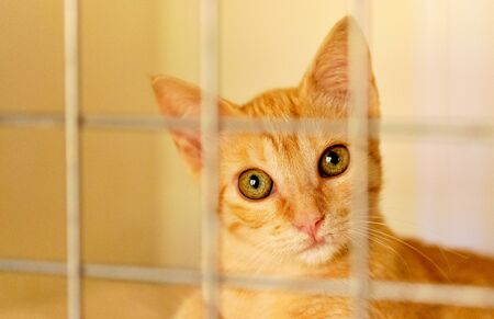 Close up view adorable cute ginger cat in a cage behind jail, concept of animal shelter, care for miserable homeless animals