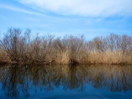 water s edge: La costa del fiume con la vegetazione sullo sfondo del cielo blu