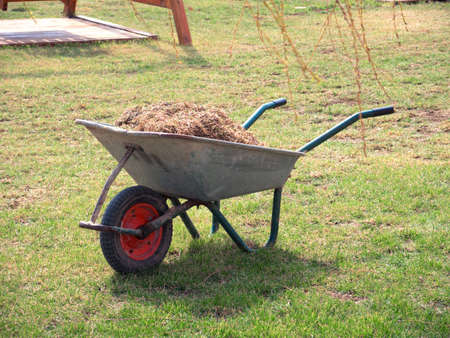 Wheelbarrow with grass on the young spring grass