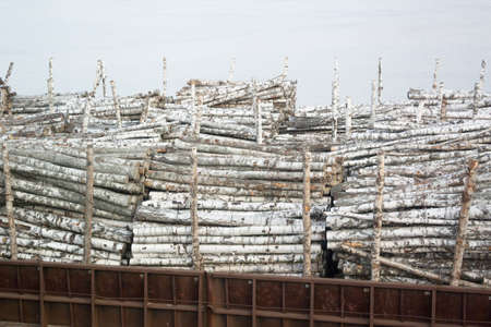 Cargo ship filled with birch logs photo