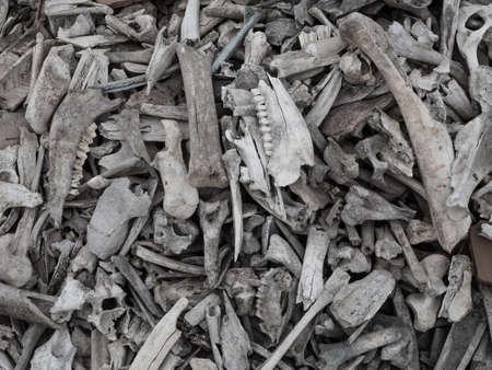Background of a pile of animal bones closeup