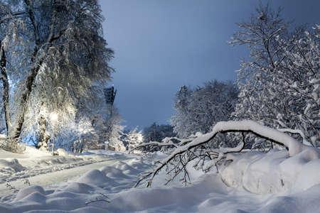 Romantic winter evening in the park